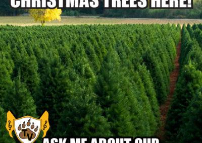 christmas-tree-fundraiser-meme-02