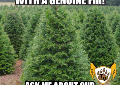 christmas-tree-fundraiser-meme-14