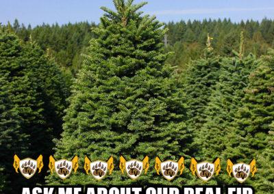 christmas-tree-fundraiser-meme-15